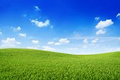 Green Grass On a Hill With Blue Sky