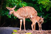 image of deer family  - Mother - JPG