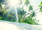 pic of samoa  - Tropical White Sand Beach in Samoa - JPG