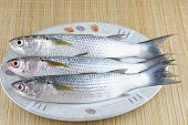 foto of mullet  - Fresh cached  Mullet fish on white plate - JPG