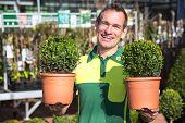 Gardener Or Employee At Garden Center Posing With Boxtrees