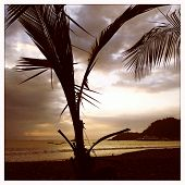 Instagram style sunset and palm tree Playa de Herradura Costa Rica