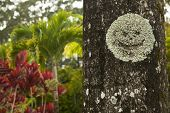 Smiley face growing on a tree at the Garden of Eden in Maui
