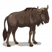 image of wildebeest  - Vector illustration of an african wildebeest isolated on a white background - JPG