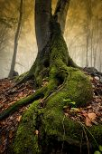 stock photo of rainy season  - Tree with big roots in enchanted forest in autumn - JPG