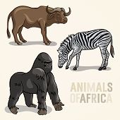 African Animals Set3