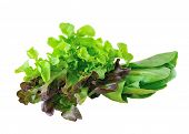 Bok Choy , Lettuce Leaves Isolated On White