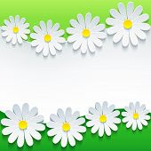 image of chamomile  - Stylish floral background 3d flower chamomiles - JPG