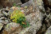 Plants on the rocks...