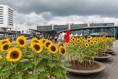 Airport Square With Sunflowers And Travellers At The Airport Of Amsterdam