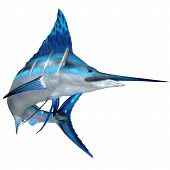Blue Marlin Ocean Fish