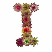 picture of piccolo  - bromeliad flower letter isolated on white background - JPG