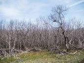 Death Trees