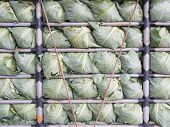 cabbage in the truck