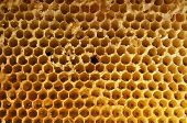 foto of honeycomb  - natural honeycombs from wax without honey honeycomb background - JPG