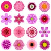 Collection Various Purple Concentric Flowers Isolated On White