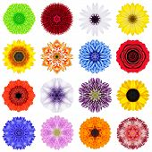 Постер, плакат: Big Collection Of Various Concentric Flowers Isolated On White