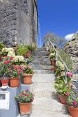 Flowers in pots on a staircase on Madeira, Portugal