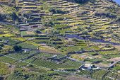 Agriculture on Madeira (Portugal) island's north coast