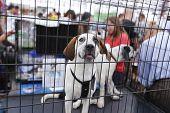 Puppies in crates