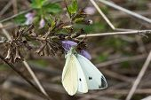 Close Up Shot Of White Butterfly