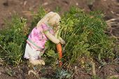 Toy Rabbit Collects Carrots In The Garden