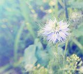Blue Flower On Meadow