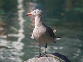 Gull On Rock