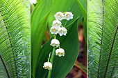 Triple - Fern Plants And Lily Of The Valley
