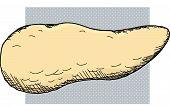 Pancreas Organ Cartoon