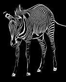 Black and white zebra illustration