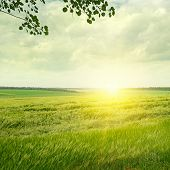 Green Field And Sunrise On The Cloudy Sky