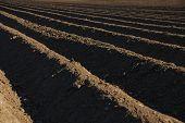 Farmland With A Dark Earth