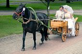 pic of carriage horse  - Romantic Bride and groom in carriage with horse on wedding day - JPG