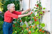 Senior Woman Taking Care Of Her Flower Vine