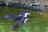 Curious River Otter