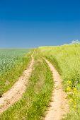 field with a path, Czech Republic