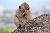 monkey sitting on mountain at Huahin , Thailand