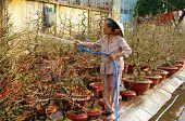 Tet On Ho Chi Minh City, Flower Market