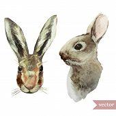 rabbit, hare, watercolor, illustration, animal, drawing
