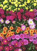 Colorful bunch of flowers background