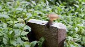 foto of mollusca  - a slug in the garden - JPG
