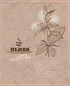 Vintage Background With Nettles On Old Paper