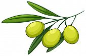Illustration of a close up olives