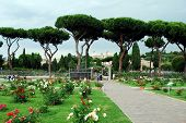 Roses In The Garden Of Rome City On May 31, 2014