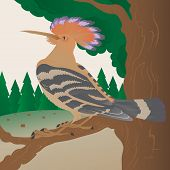 Colorful Hoopoe sitting on a branch