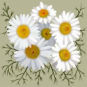 Illustration Of Camomile Flower (chamomile) Isolated On Color Background