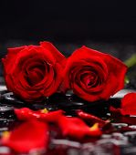 picture of six-petaled  - Still life with Red two rose and wet stones - JPG