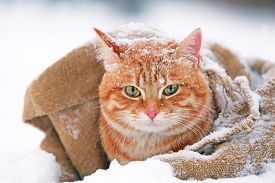 picture of blanket snow  - Cute red cat wrapped in blanket on snow background - JPG