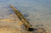 stock photo of cape-cod  - Waterlogged timber finds a home on a Cape Cod beach - JPG